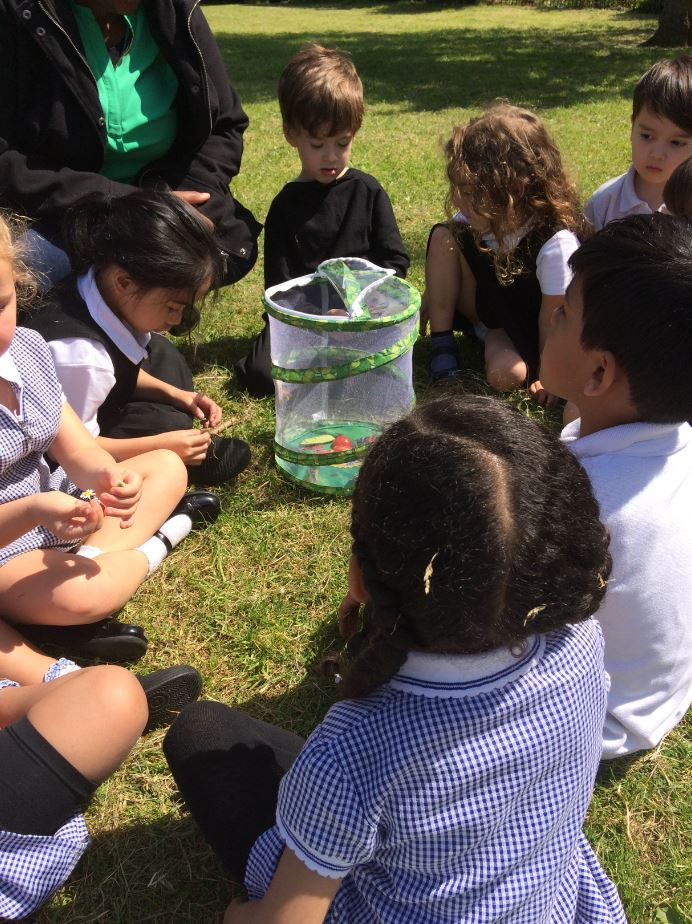 Bluebell Class release their Butterflies!