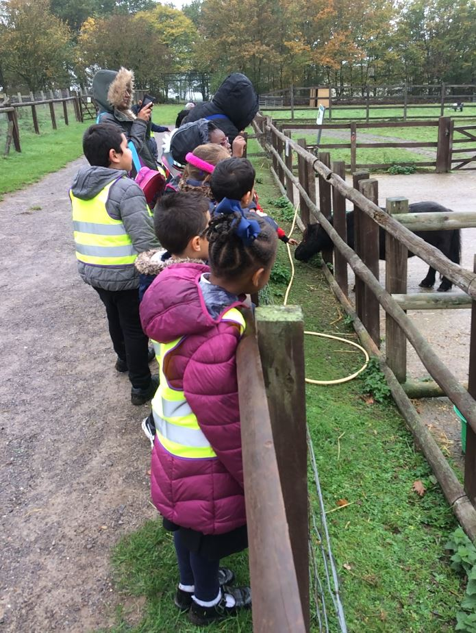 Hainault Forest – Year 2 Trip